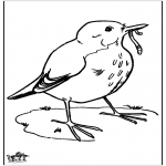 Animals coloring pages - Blackbird