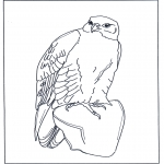 Animals coloring pages - Falcon