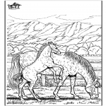 Animals coloring pages - Horse 6