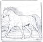 Horse gallop at full