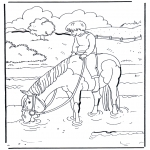 Animals coloring pages - In the water