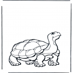 animals coloring pages - Land turtle