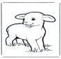Little lamb 1