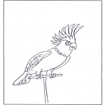 Animals coloring pages - Parrot 4