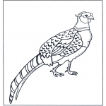 Animals coloring pages - Pheasant