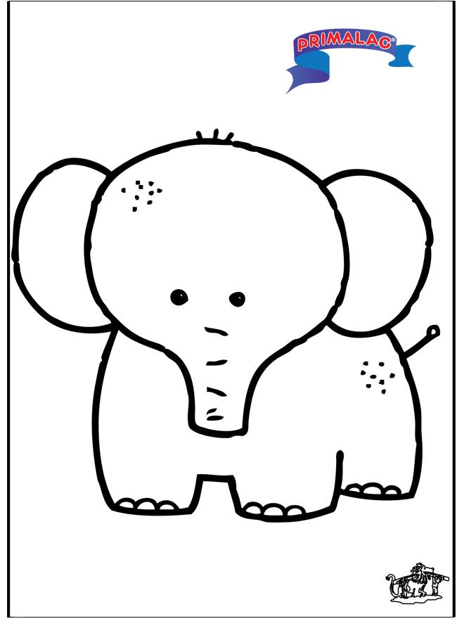 Primalac elephant - Animals