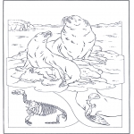 Animals coloring pages - Sea lions
