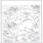 Animals coloring pages - Seals