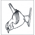 Animals coloring pages - Wren